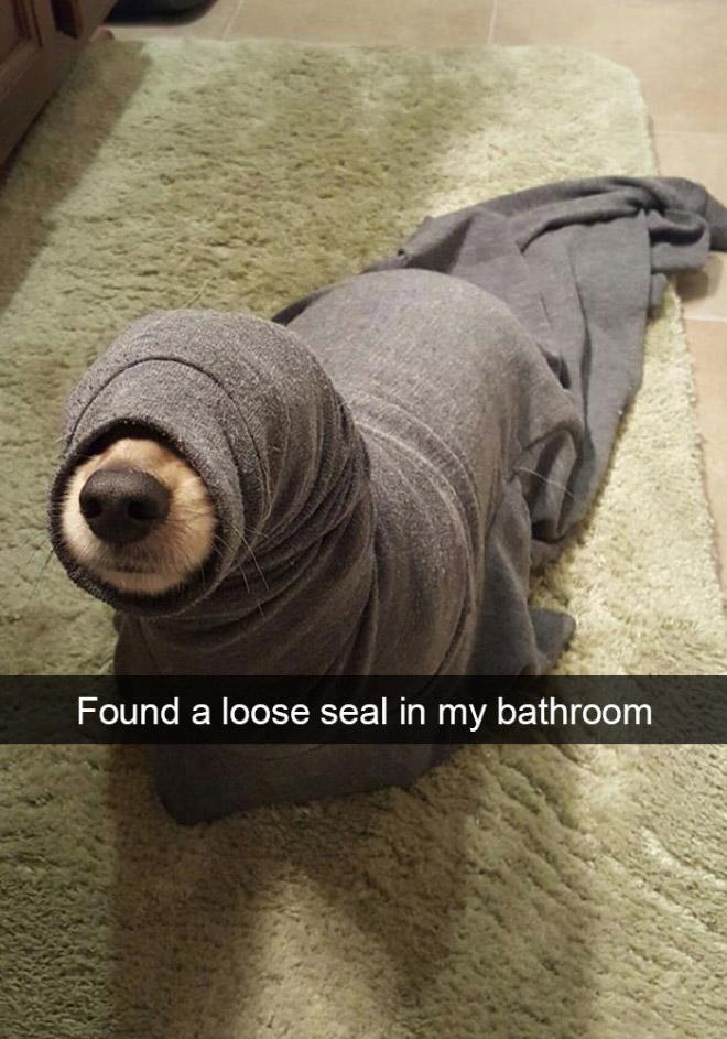 عکس های بامزه حیوانات