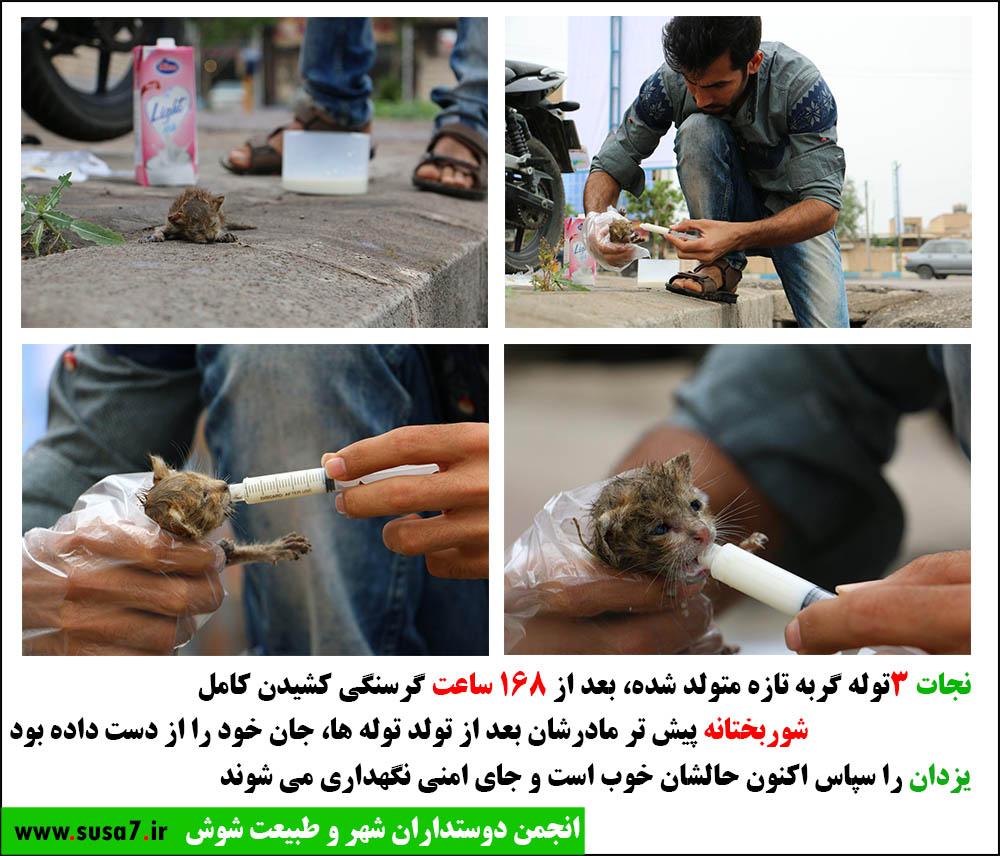 نجات سه توله گربه در حال مرگ+انجمن دوستداران شهر و طبیعت شوش+ساسان ساکی
