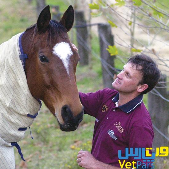 مراقبت از اسبهای مسن