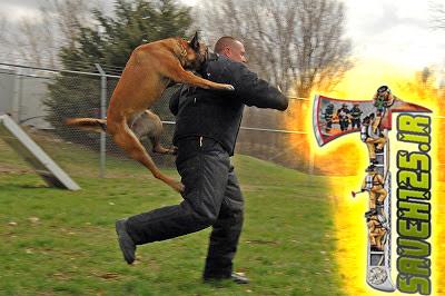 رویارویی با سگ های مهاجم