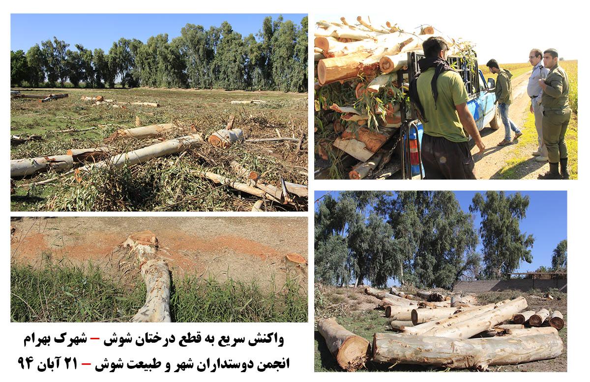 مانع شدن از قطع درختان شهرک بهرام+قطع درختان شوش+انجمن محیط زیست شوش+ساسان ساکی