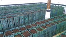 طرح توجیهی تولید کود ورمی کمپوست از کود دامی