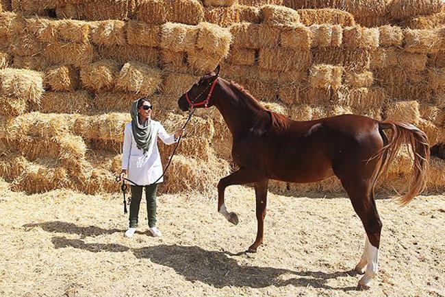 کنسانتره اسب های 2 ساله