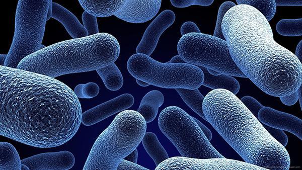 تفاوت باکتری و ویروس