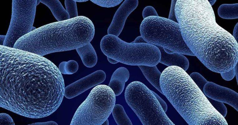فلور روده - میکروبیم