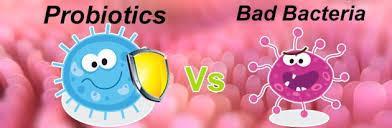 کمبود باکتری های مفید روده ف علت بسیاری از بیماری هاست