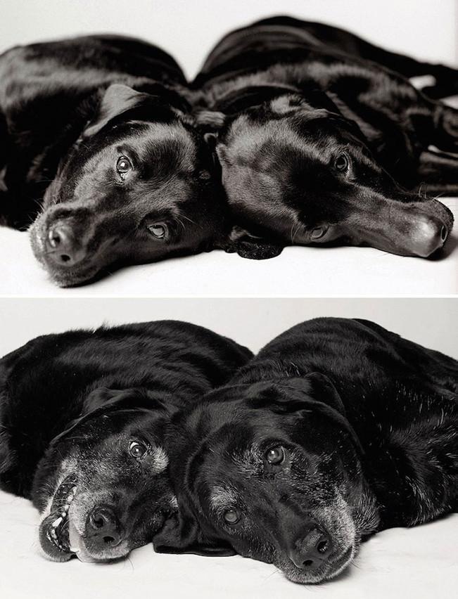 چشم سوم : تصاویر دلگرم کننده از توله سگ هایی که تبدیل به سگ های بالغ و عاقل شدند!