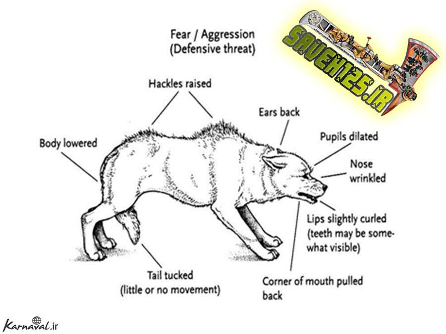 تهاجم سگ