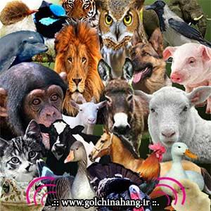 دانلود صدای انواع حیوانات برای موبایل