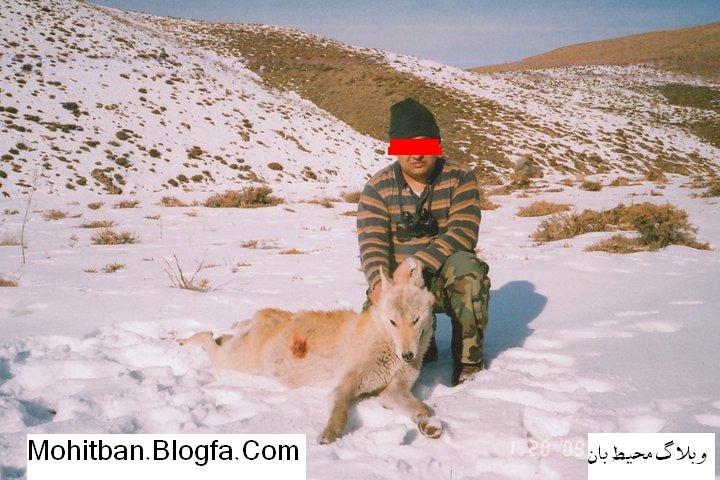 کشتار گرگ ایرانی