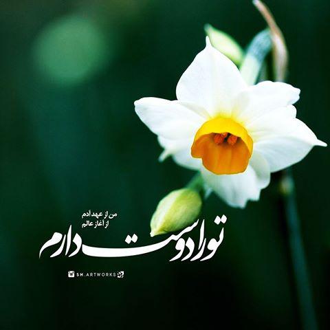 من از عهد آدم تو را دوست دارم گل نرگس