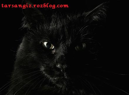 داستان گربه سیاه