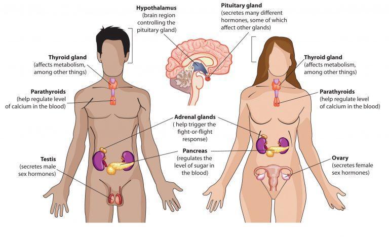 هورمون ها و غدد مترشح داخلی
