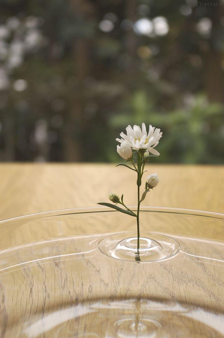 گل های شناور توسط قاب مخصوص