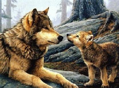 گرگ و توله